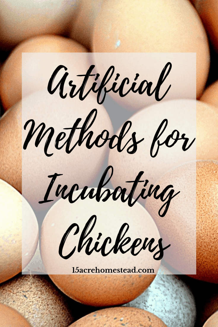 Artificial incubation is a fun process to learn while homesteading. Have you hatched your own chicks yet?
