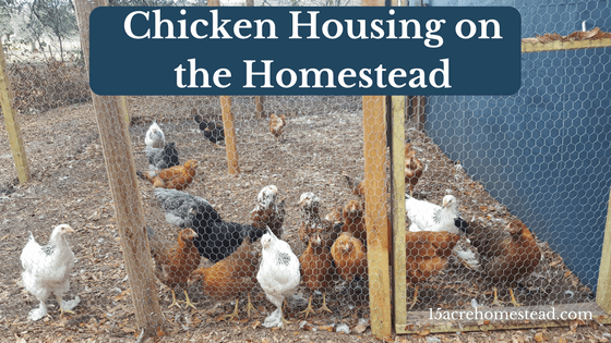 Chicken housing on the homestead