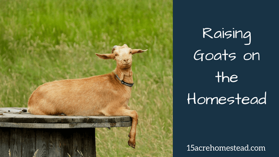 Raising Goats on the Homestead