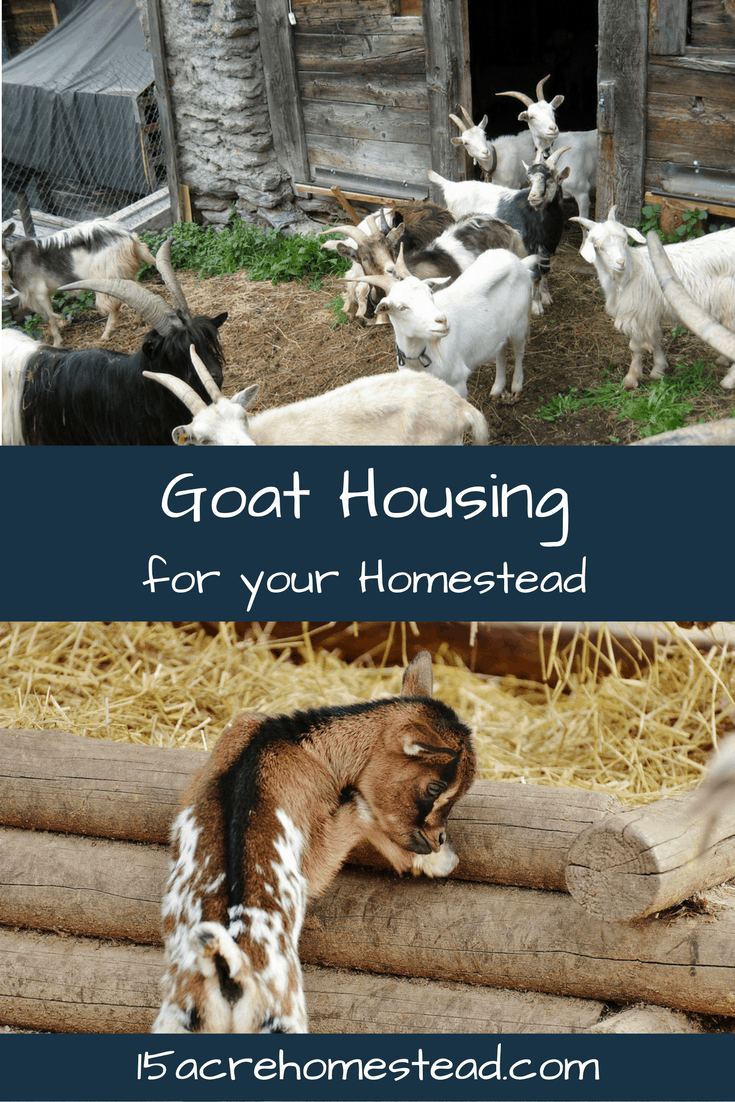 All about goat housing and more. Gotta keep those goats happy and safe!