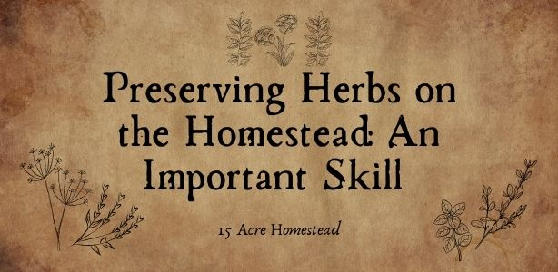 Preserving herbs featured image