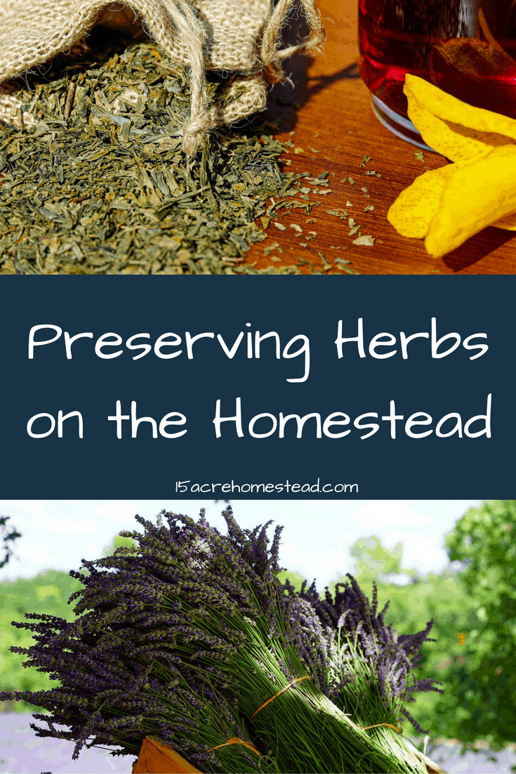 Preserving herbs is easy if you know how!