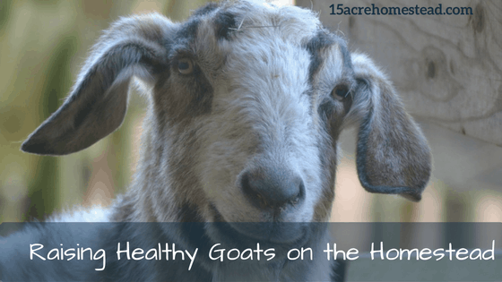 Raising Healthy Goats on the Homestaed