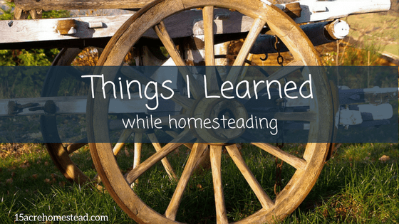 Lessons I Learned While Homesteading
