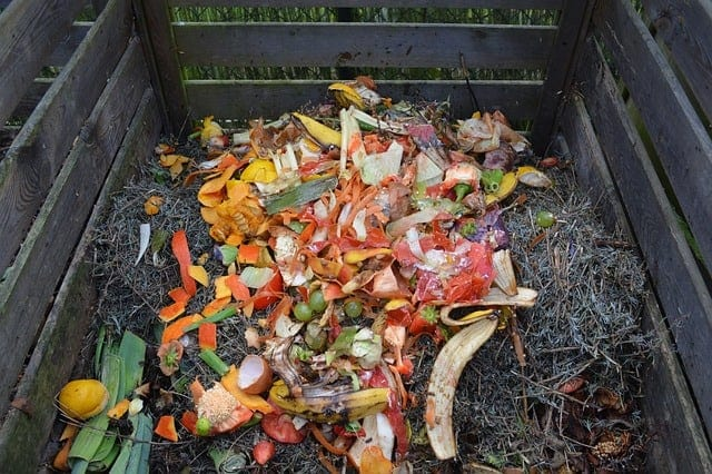 discarded vegetables on top of compost in bin