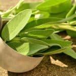 herbs-sage