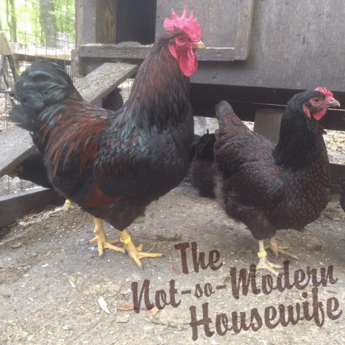 homesteading blogs notsomodern.com