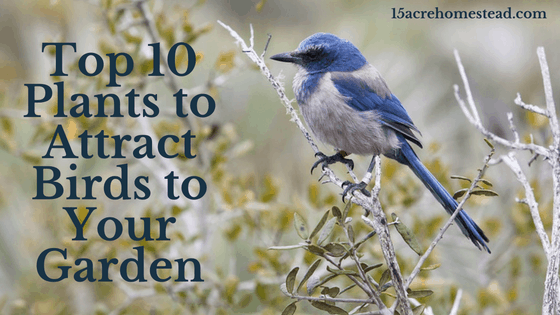 Top 10 Plants to Attract Birds to Your Garden