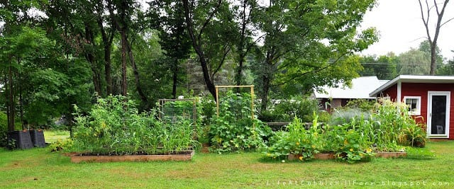 homesteading blogs life at cobble hill farms