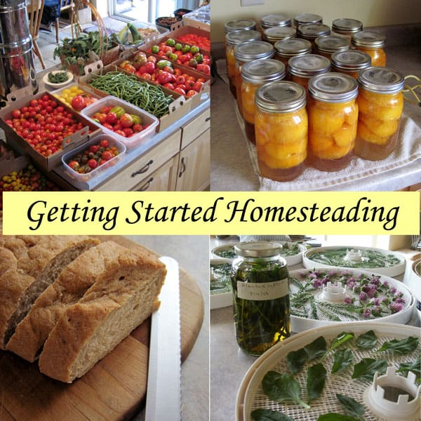 homesteading blogs commonsensehome.com
