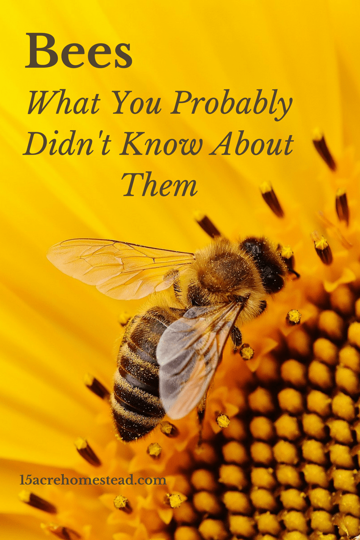 Bees are important to our ecosystem and our food source, find out why and how they do it all.