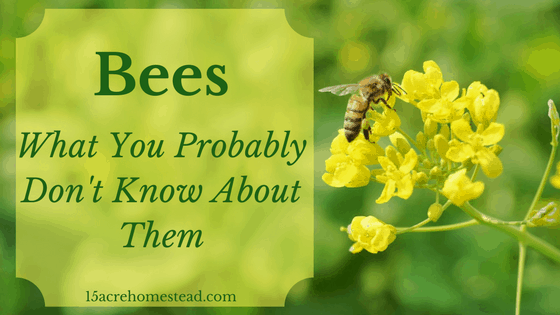 Bees: What You Probably Didn't Know About Them