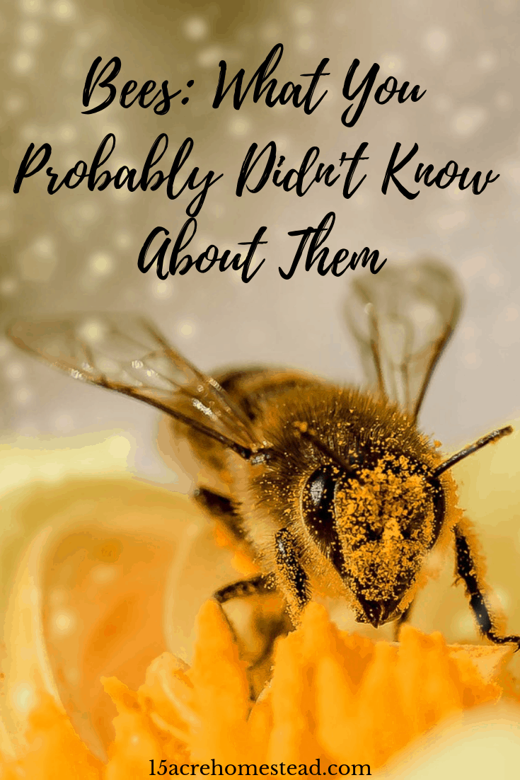 Bees are so important to our poulation surviving! Bees have more purpose than you may be aware of! Read on to learn all you can about the bees and why we should help them survive!