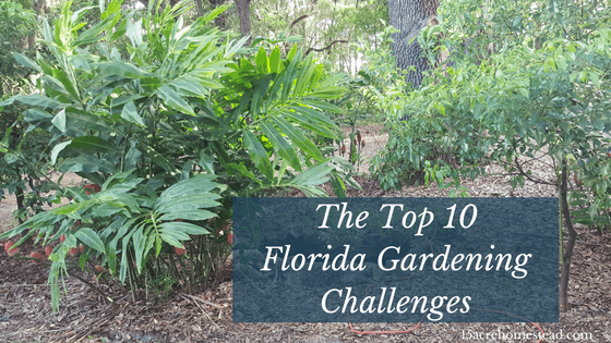 The Top 10 Florida Gardening Challenges