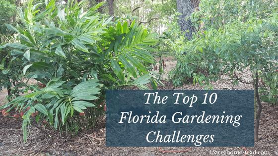 The Top 10 Florida Gardening Challenges
