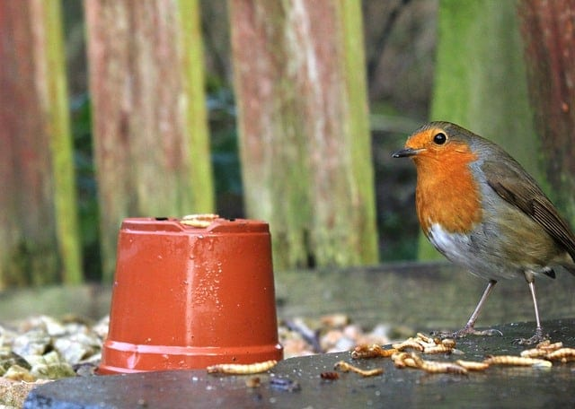 bird and mealworm