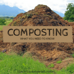 Composting: What You Need To Know About It