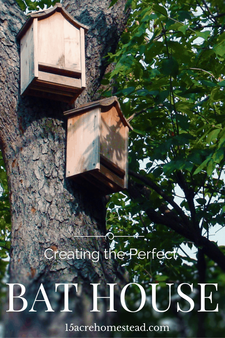How to build a bat house the correct way to actually attract the bats.