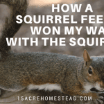 How a Squirrel Feeder Won my War with the Squirrels.