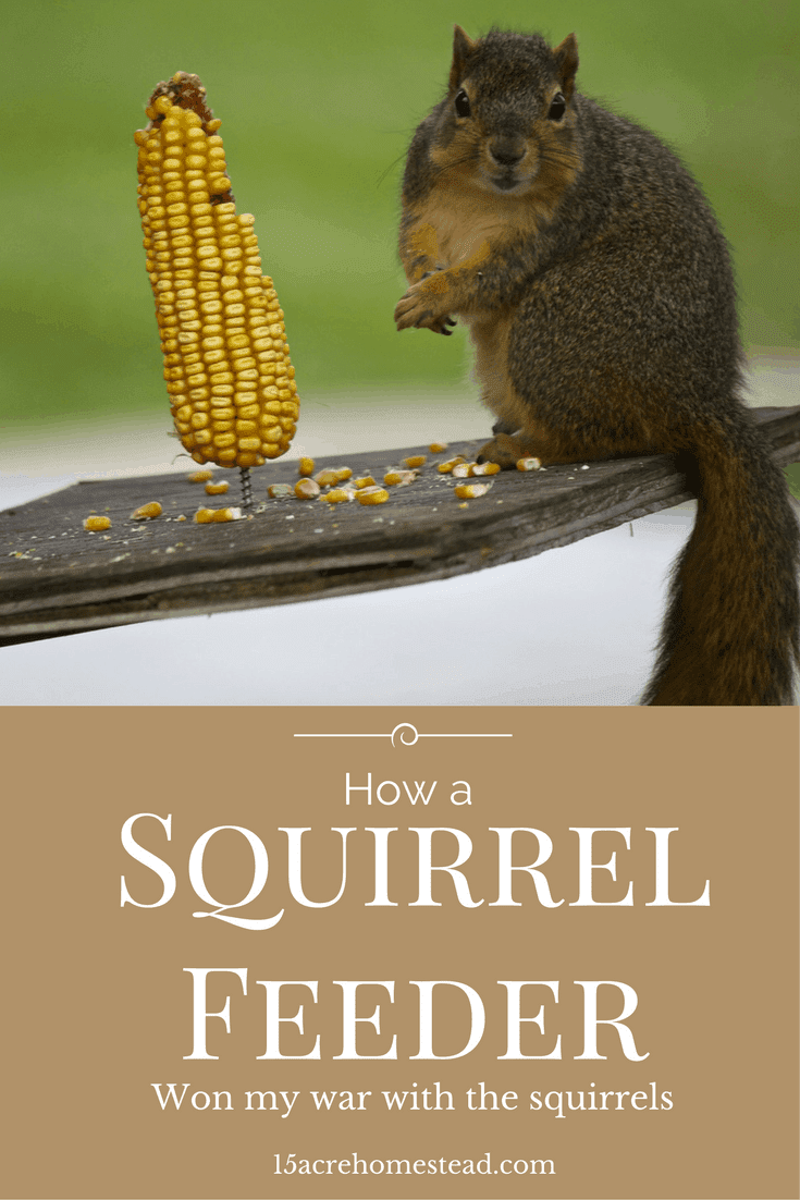 How to build a simple squirrel feeder.
