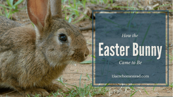 3 Stories of How the Easter Bunny Came to Be
