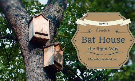 How To Create a Bat House the Right Way