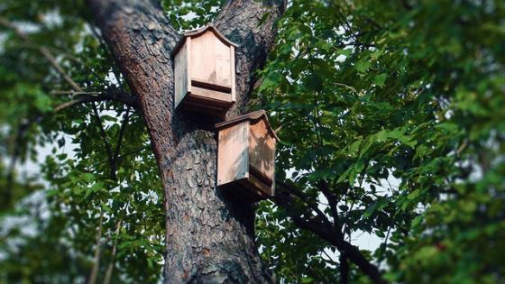 mounted on tree