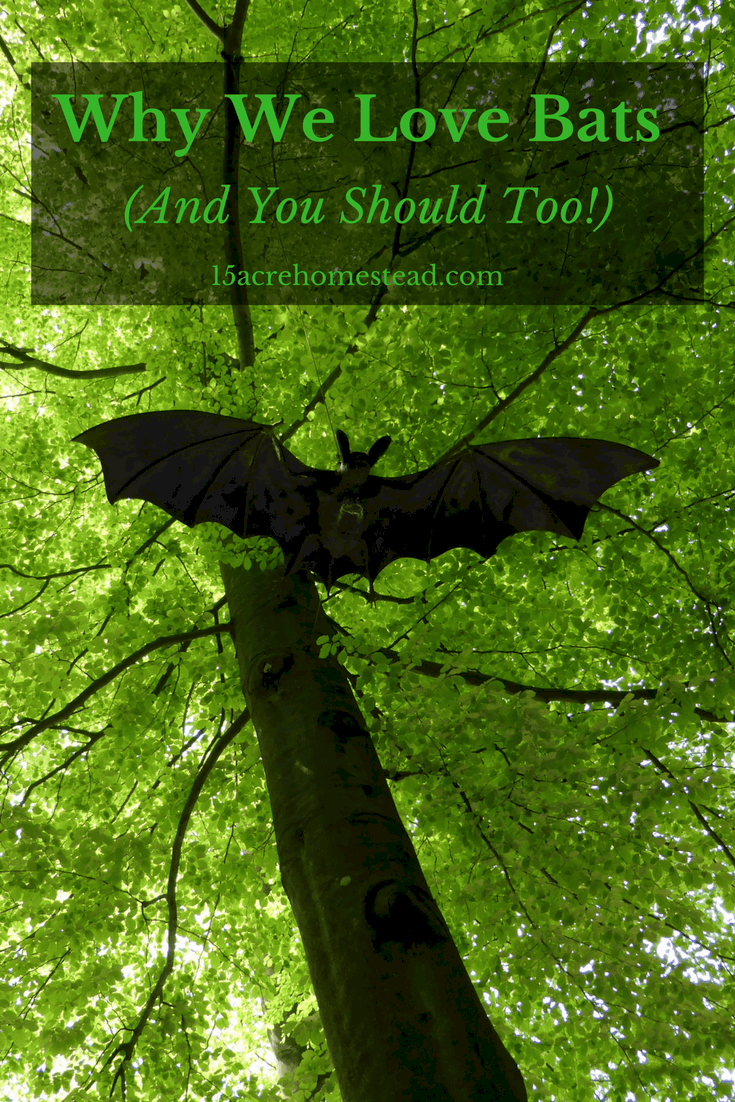 Bats are really beneficial to control bugs and to pollinate flowers and crops.