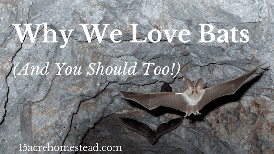 Why We Love Bats: (And You Should Too!)