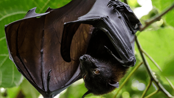 bats: hanging in a tree