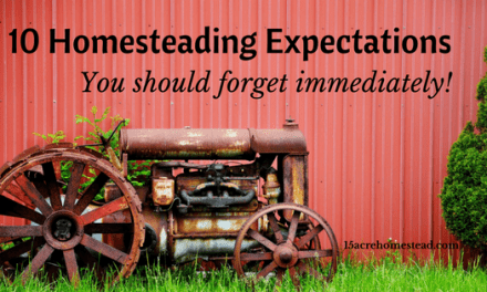 10 Homesteading Expectations You Should Forget Immediately!