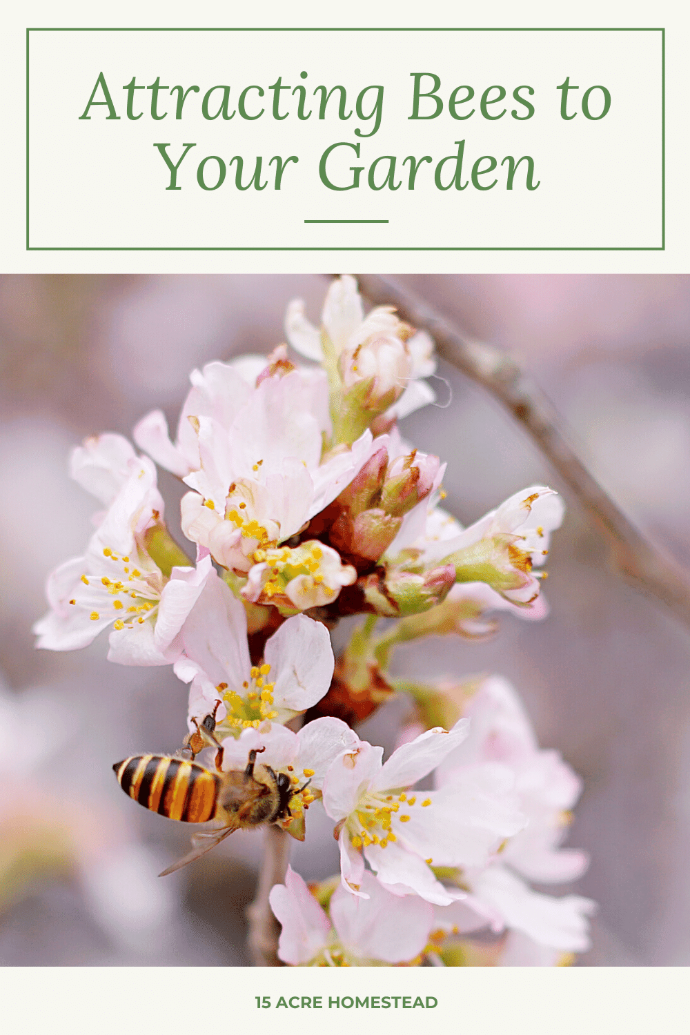 With bees being in the decline that they are in, consider attracting bees to your garden.