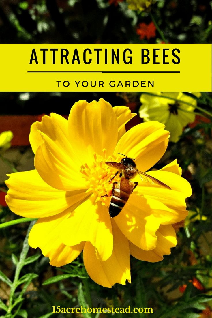 Attracting bees can be beneficial to your garden and can help save the bees.