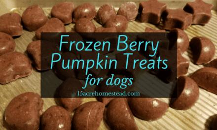 Frozen Berry Pumpkin Treats