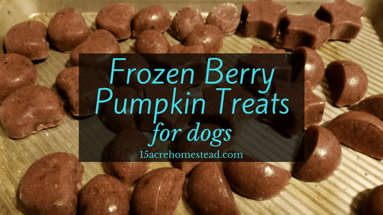 Frozen Berry Pumpkin Treats for Dogs