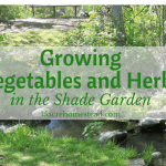 Growing Vegetables and Herbs in the Shade Garden
