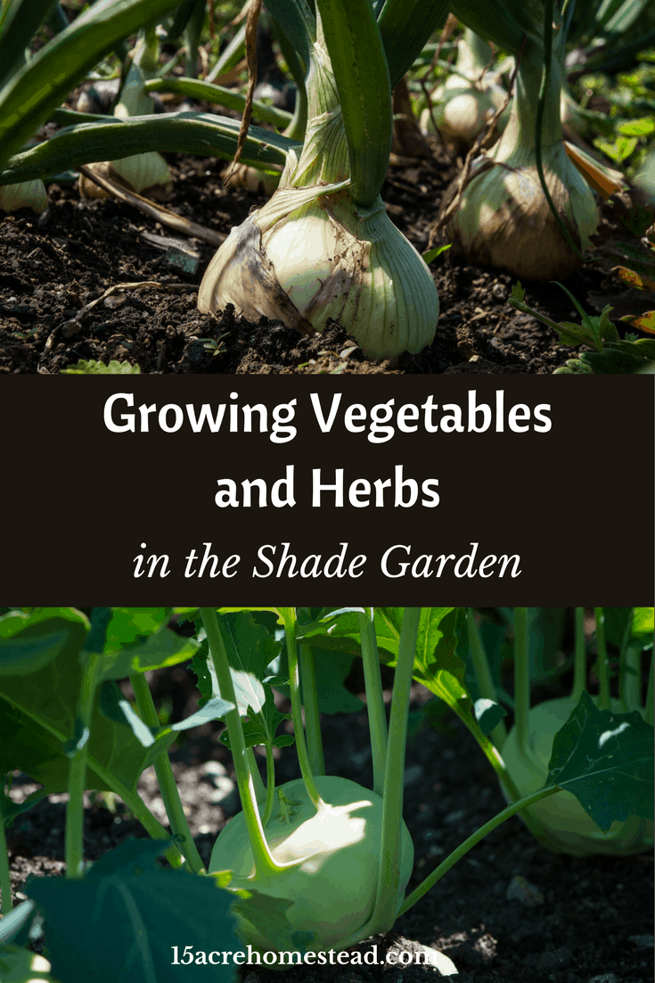 Growing vegetables and herbs can be done in the shady garden.