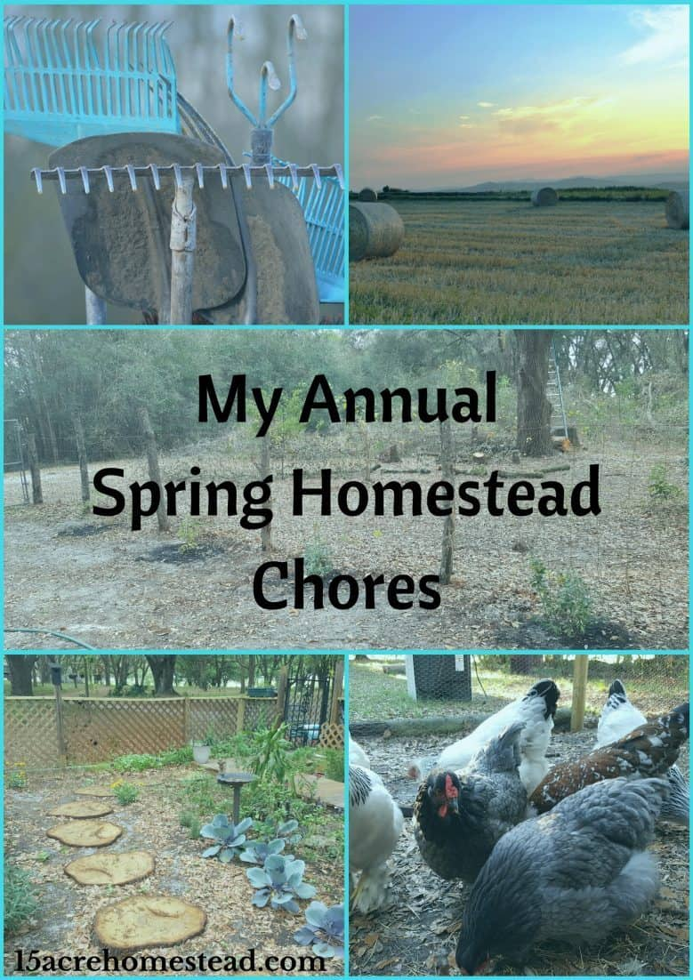 There are many annual spring homesteading chores that should be done on your homestead.