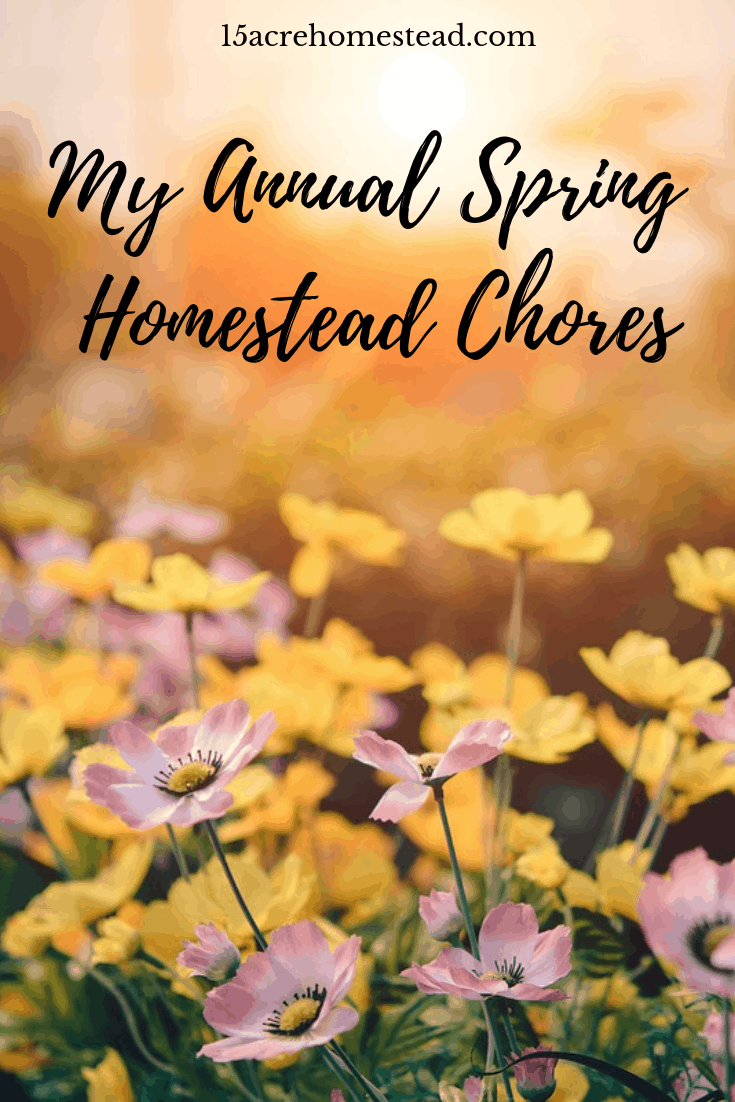 Having a plan each spring to tackle any maintenance issues can be a hug help on the homestead! See what you can learn from my spring chores list.
