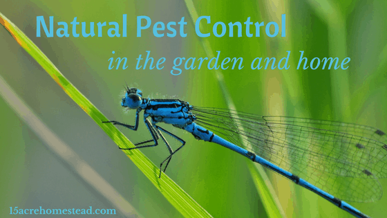 Natural Pest Control in the Garden and Home