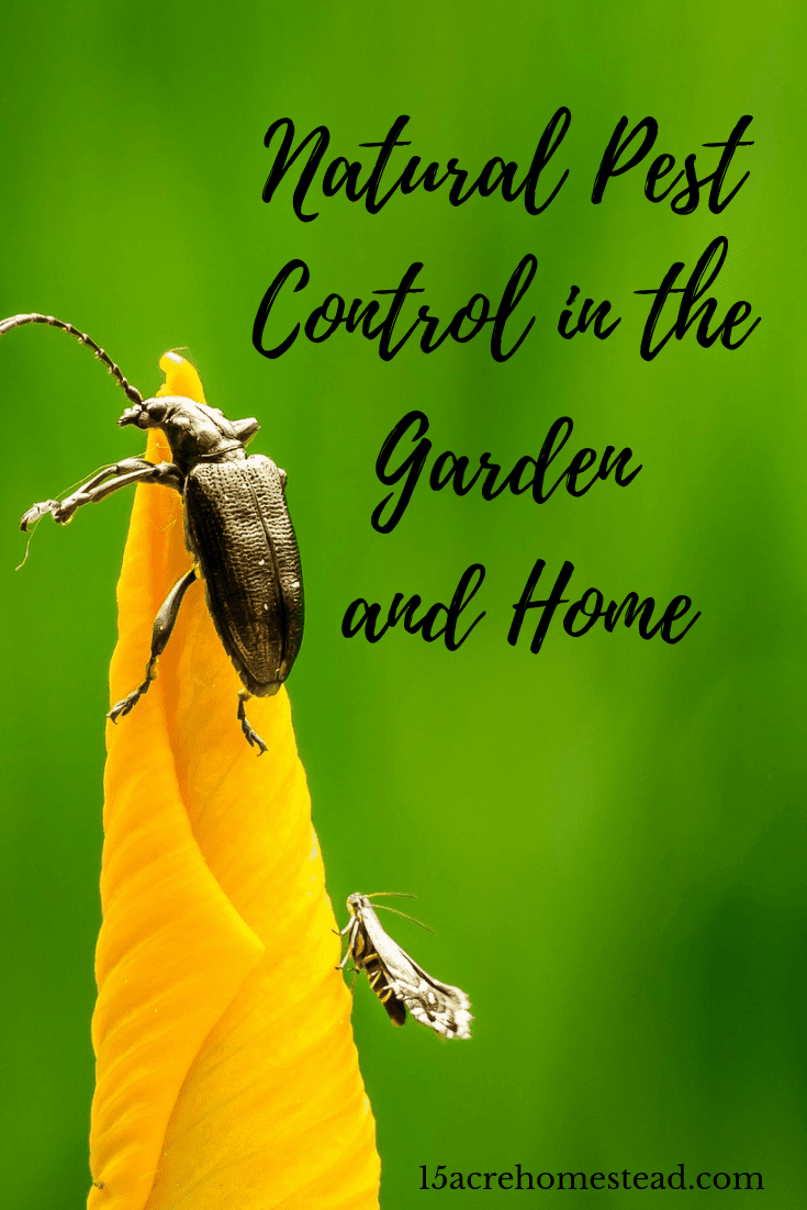 Using a form of natural pest control on the homestead means getting rid of those pesky bugs in a more natural way.