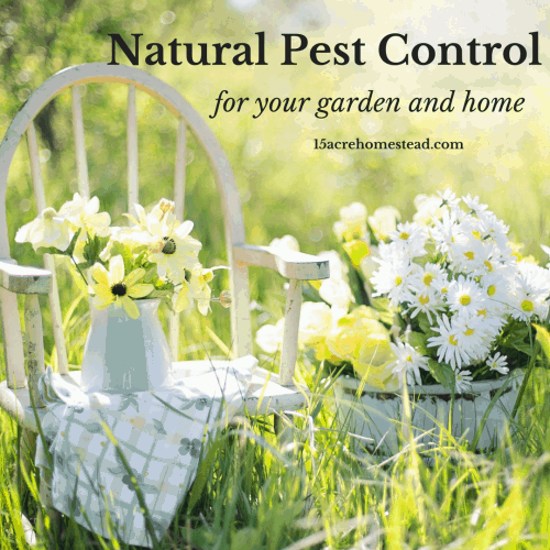 natural pest control in the garden and home 15 acre homestead