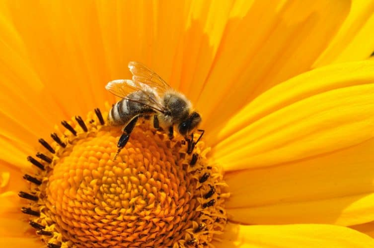 bee-natural-pest-control
