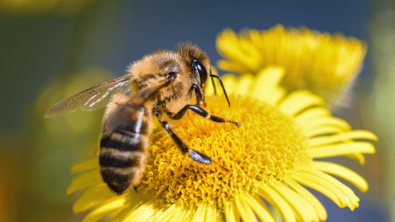 attracting bees featured image