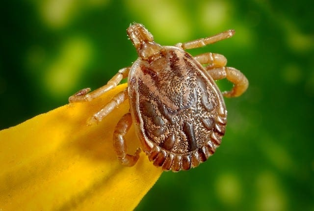 Ticks can be controlled by nest pest control methods.