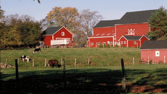 ideal homestead