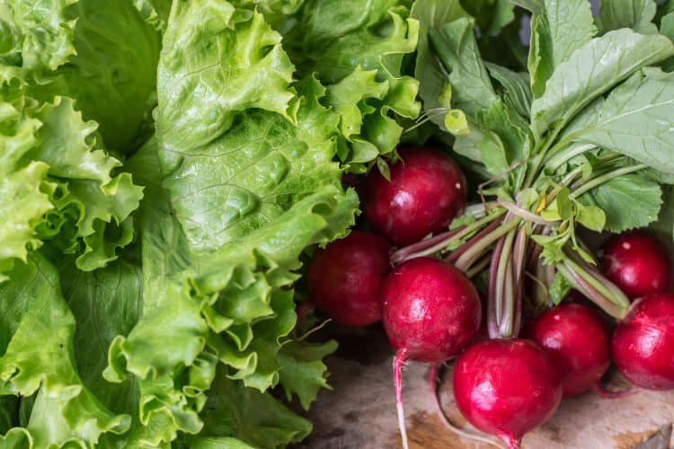radish-lettuce