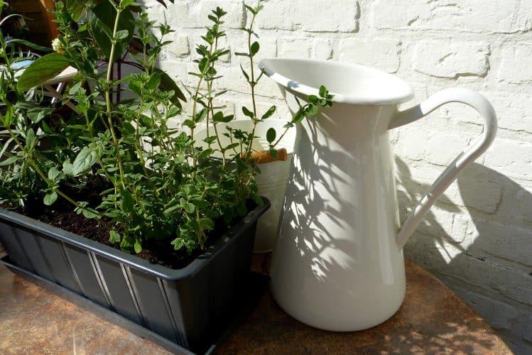 shady-herb-garden