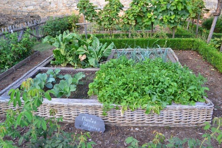 raised-bed-shade-garden