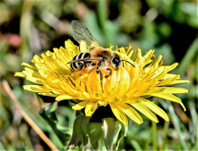 Commercially grown foods are eliminating the bee population